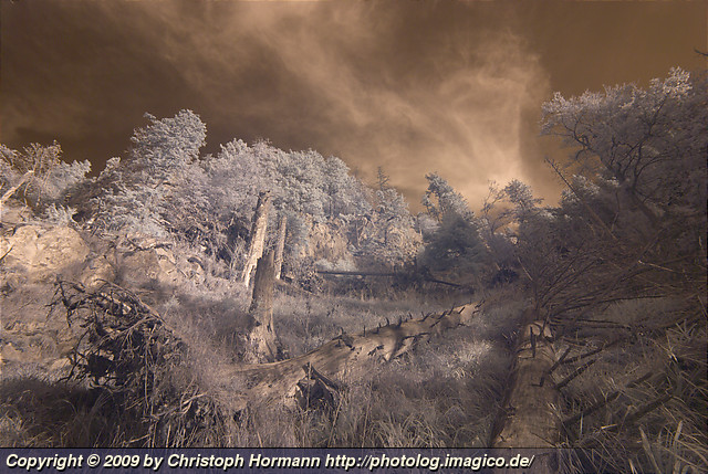 image 49: Dead trees in infrared
