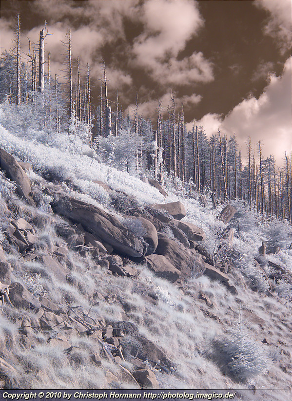 image 59: Northern Black Forest, infrared
