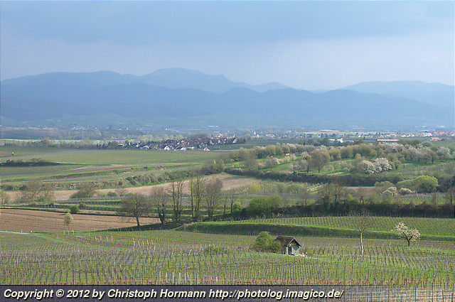 image 88: Rhine valley spring