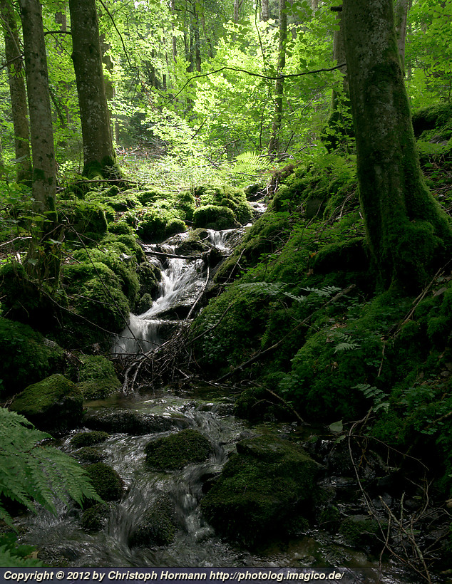 image 99: Black forest creek