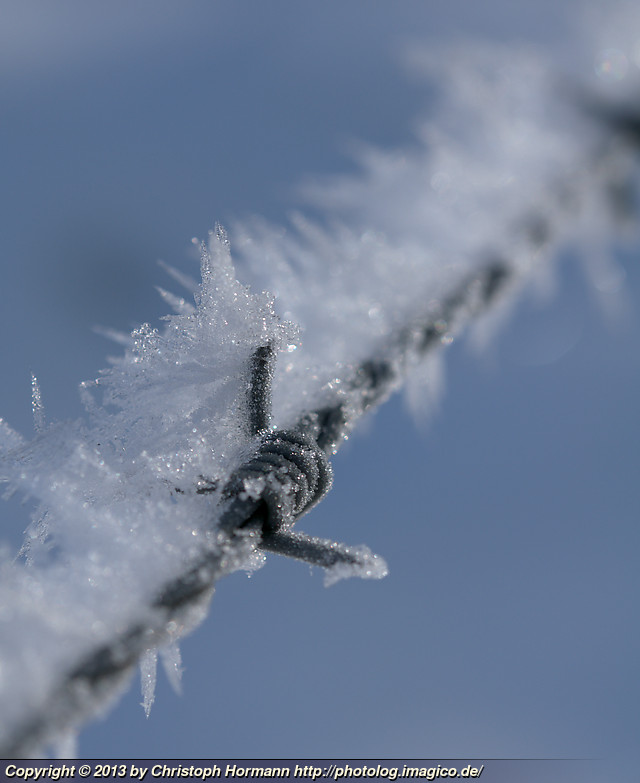 image 104: Rime on barbed wire